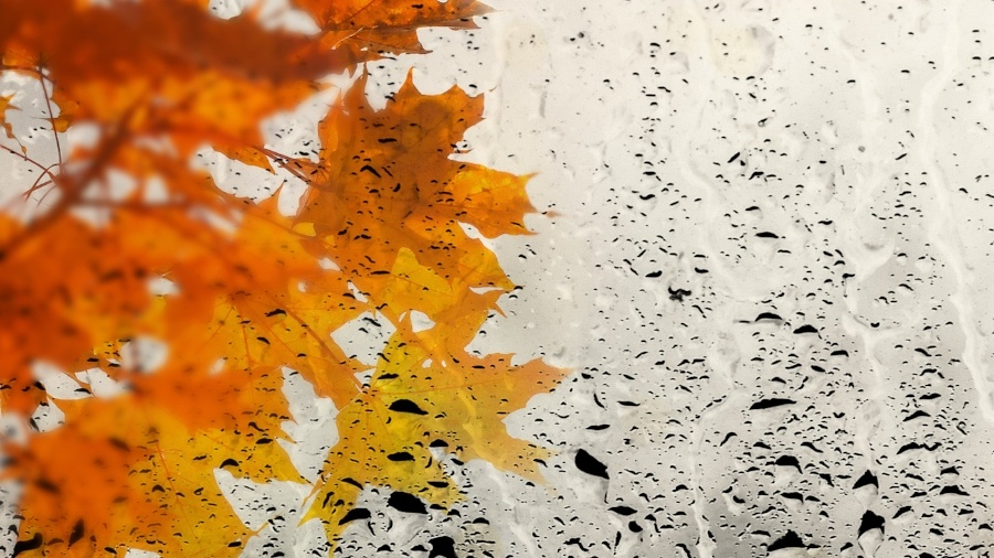 Fleet Safety Tips for Driving in Heavy Autumn Rains